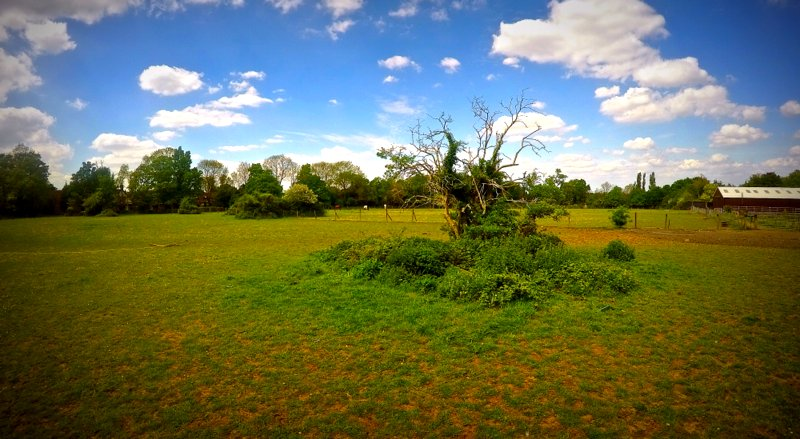 The spacious fields at New Barn Stables in Kent.